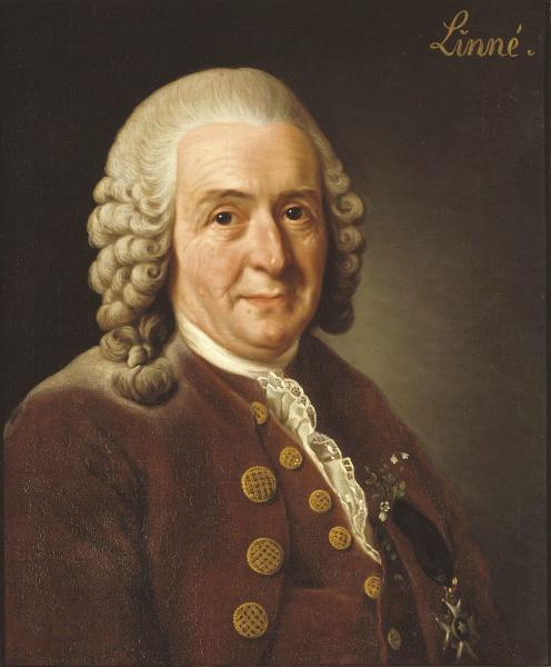Carl von Linné (*23.Mai 1707, †10.Januar 1778), Quelle: Alexander Roslin, Lizenz: Public domain